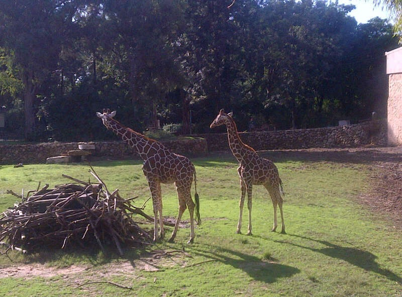 Tel Aviv Family Fun | The Ramat Gan Safari